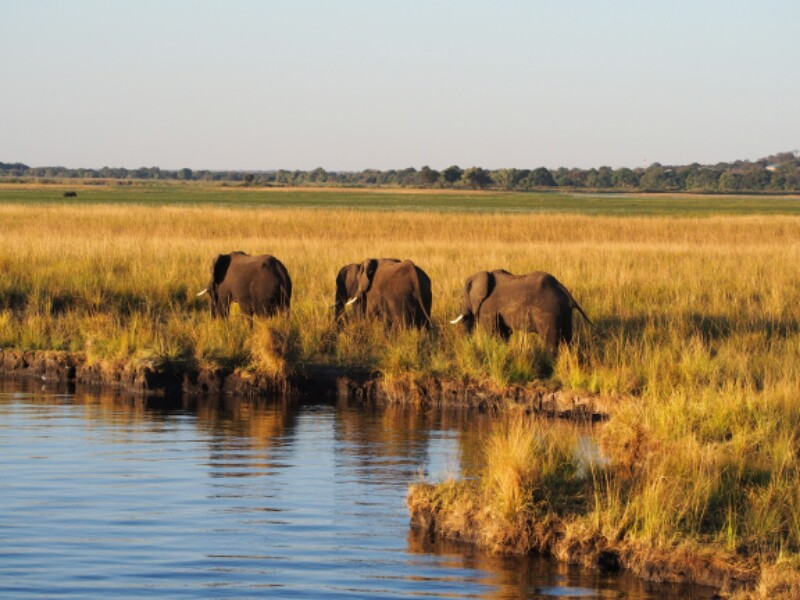 Chobe Boot Elefant 2