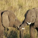 Chobe Boot Elefant 3