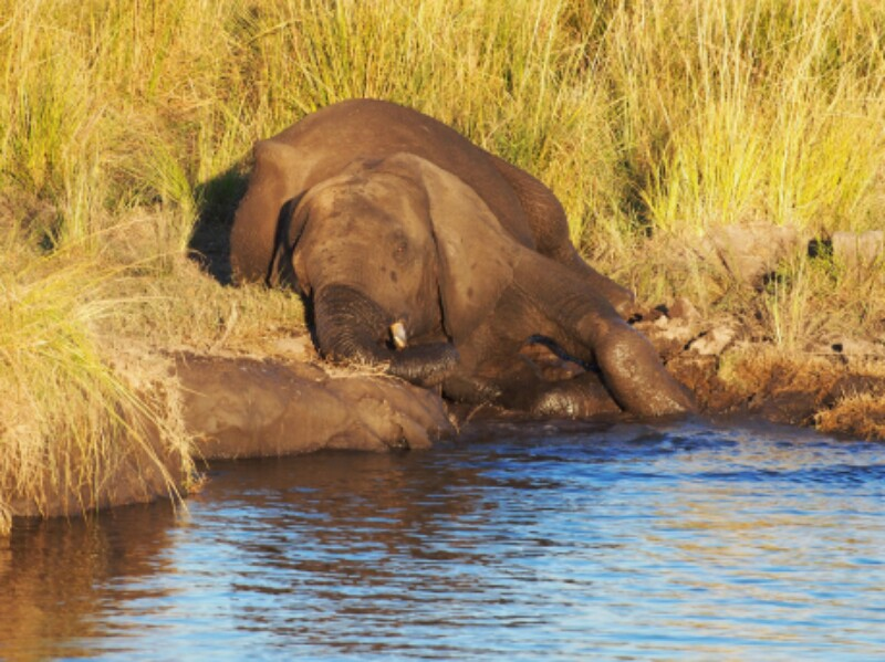 Chobe Boot Elefant 4