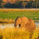 Chobe Boot Elefant 5
